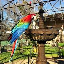 Zoo das Aves
