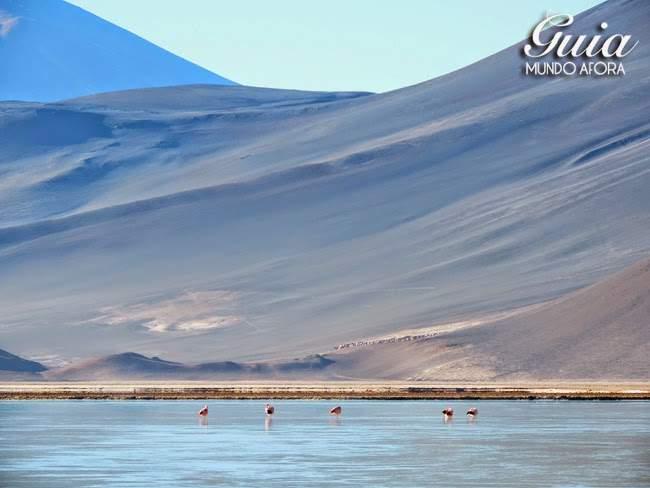 Flamingos no deserto do Atacama