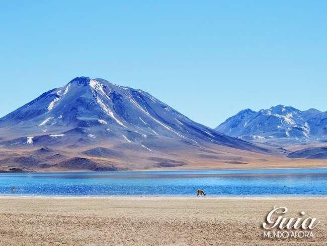 Lagunas Altiplanicas no Deseto do Atacama