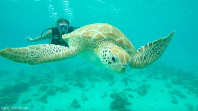 mergulho em barbados com tartarugas