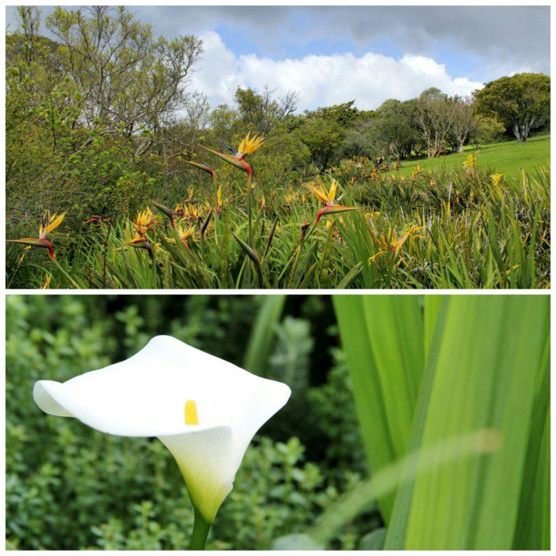flores do Jardim botânico de Cape Town