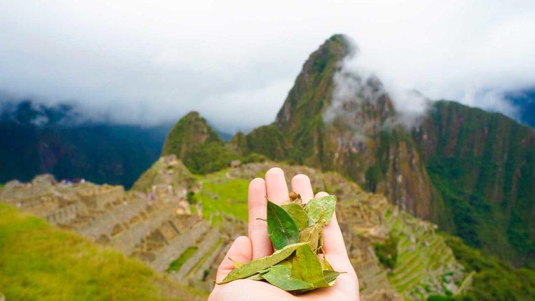 folhas de coca em Machu Picchu