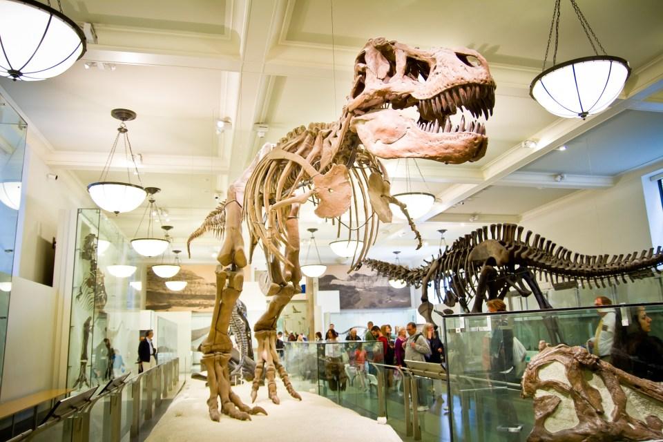 Visitar el American Museum of Natural History