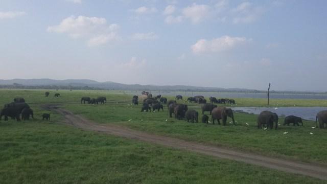 Si tenéis suerte de ir en un buen día podréis ver cientos de elefantes y algunos otros animales de forma mas esporádica.