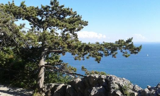 sentiero rilke escursione guida bora trieste sabina viezzoli