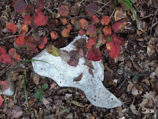 carso triestino foglie rosse sommaco bora
