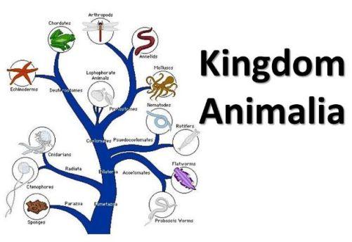 kingdom Animilia