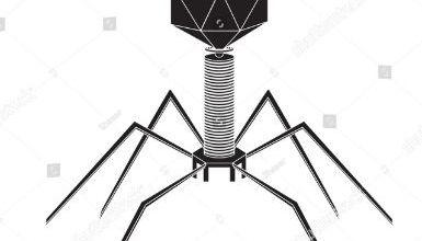Phage Virus
