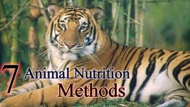 7 Animal Nutrition Methods
