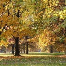 Scopri la bellezza dei paesaggi della regione Mazovia anche d'autunno.