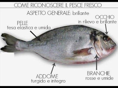 Pesce fresco come riconoscerlo