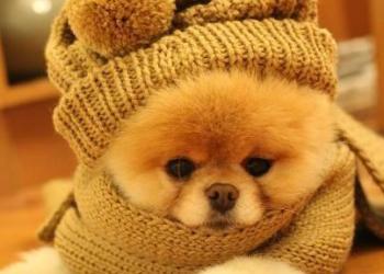 cane-raffreddore