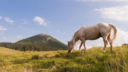 Гора Хом'як (1 542 м), Татарів — туристичний маршрут ...
