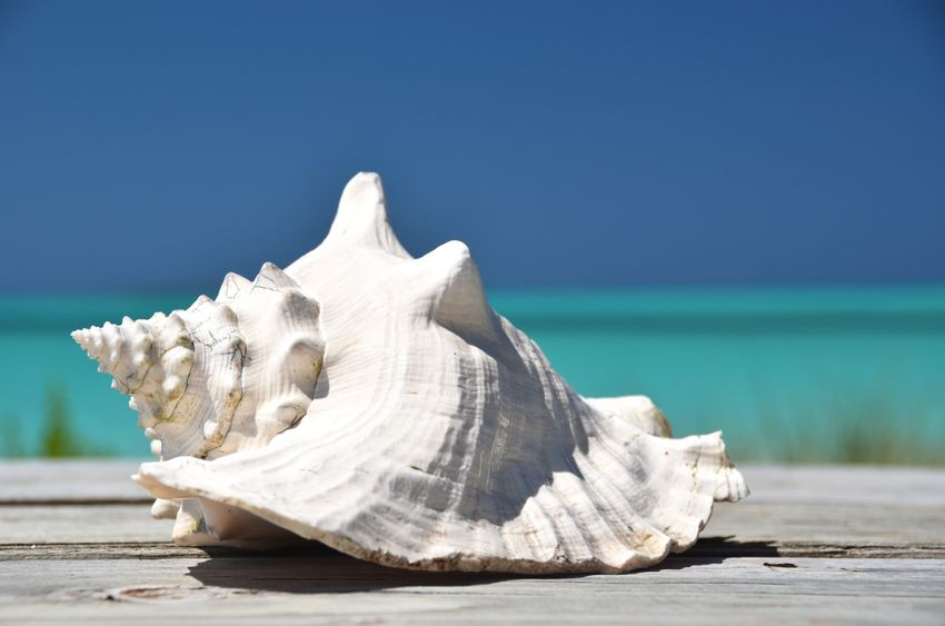 Guide to Shelling on Marco Island, Florida