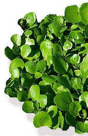 Health Benefits of Watercress