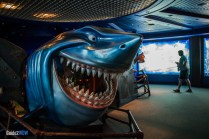 Bruce's Shark World- The Seas with Nemo and Friends - Epcot Attraction