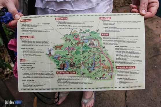 Map - Maharajah Jungle Trek - Animal Kingdom Attraction