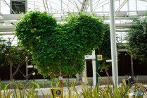 Mickey Shaped Plant - Living with the Land - Walt Disney World