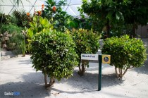 Miracle Fruit - Living with the Land - Walt Disney World