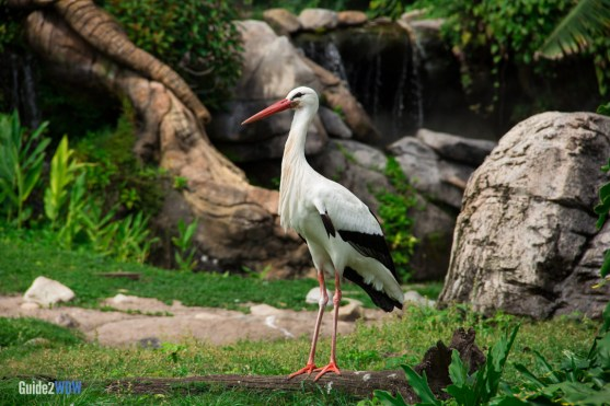 Stork - Discovery Island Trails - Animal Kingdom Attraction