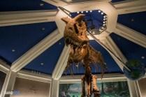 T-Rex - Dinosaur - Animal Kingdom Attraction