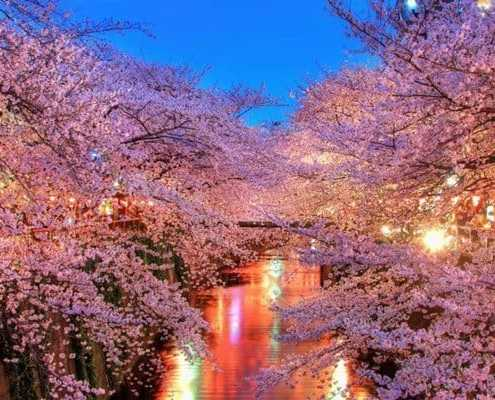 Sakura rivière Meguro Tokyo - Guide Francophone au Japon