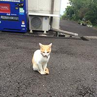 鵜戸神宮の猫
