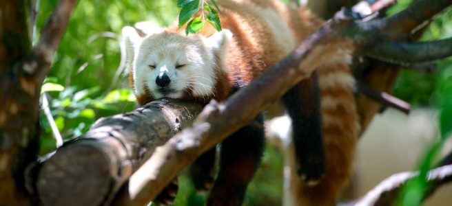 Trust versus Status: Hypnotising the Mammalian Brain