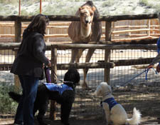 Guide Dog The Living Desert