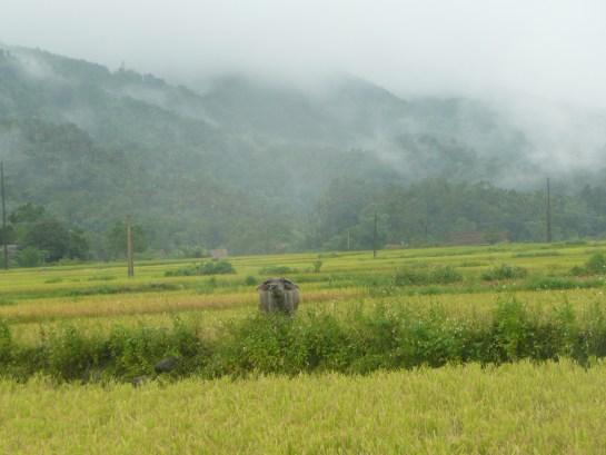 Une vallee pres de ha Giang