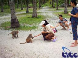 l'ile des singe- Nha Trang