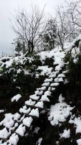 neige_sapa5