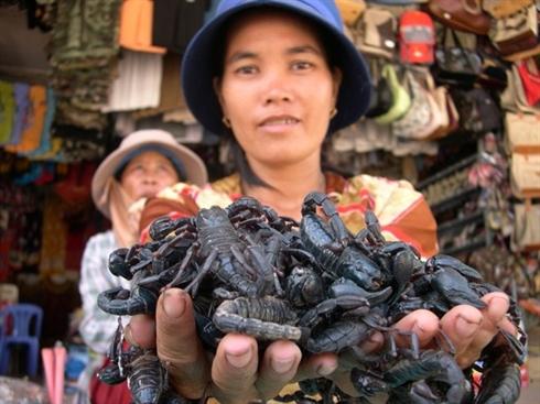 marche d'insecte au Vietnam_2
