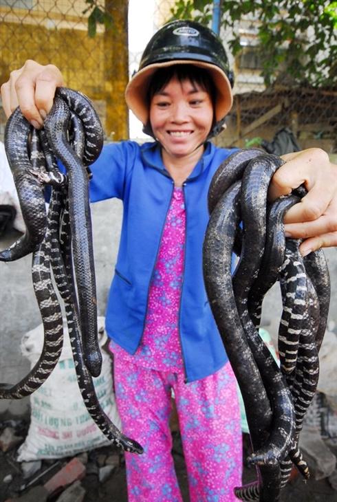 marche d'insectes au Vietnam_9