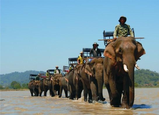 village elephant Nhon Hoa