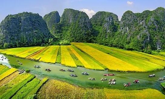 tam coc saison de riz.jpg