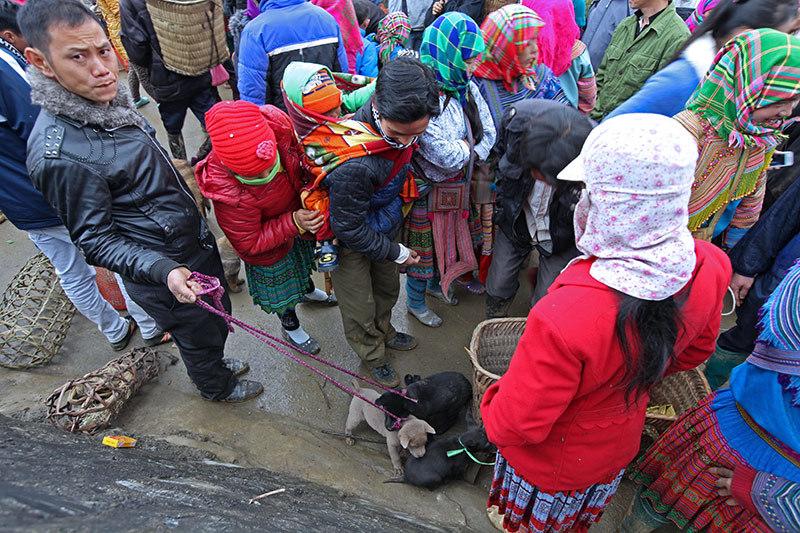 visite marches ethniques nord vietnam chien de chasse.jpg