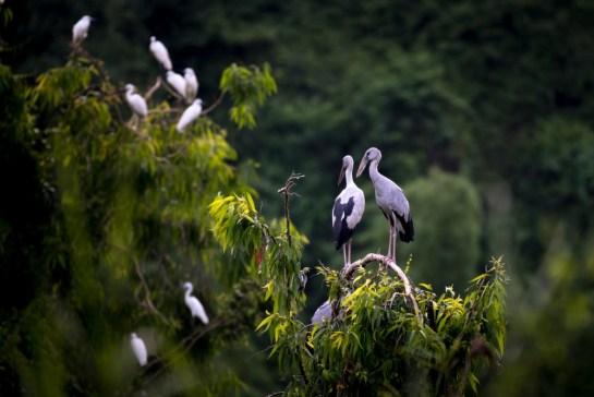 oiseaux dans le parc