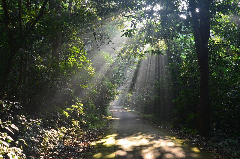 parc national de cuc phuong