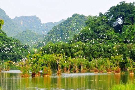 parc ornithologique thung nham