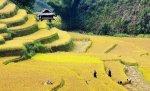 La saison des récoltes à Ha Giang