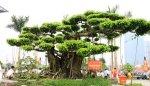 Le village des bonsaïs à Nam Dinh