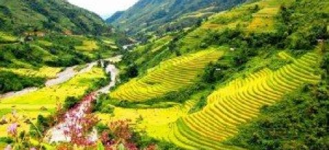 Vallee de Muong Hoa Sapa