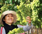 La province de Ninh Thuân attire des touristes