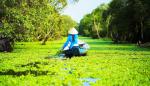 Forêt des cajeputiers de Tra Su