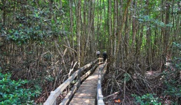 Voyage parc national de Mui Ca Mau