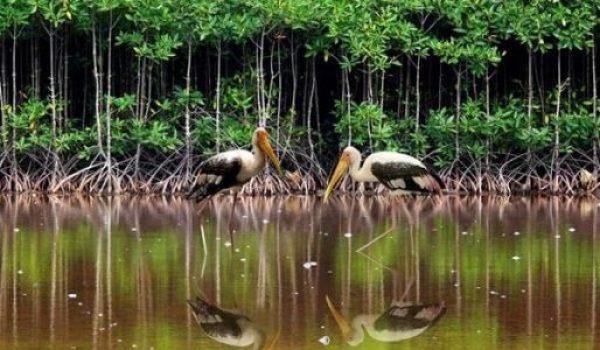 Voyage parc national Con Dao
