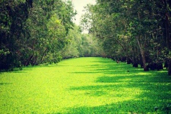 Découverte forêt de cajeputiers de Tra Su à An Giang