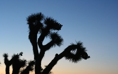 Is Joshua Tree National Park Your Next Outdoor Adventure?