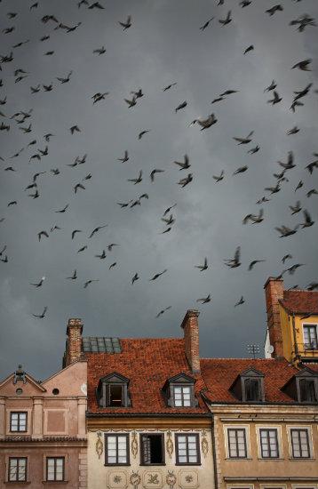 Ptaki na niebie nad Starówką w Warszawie.